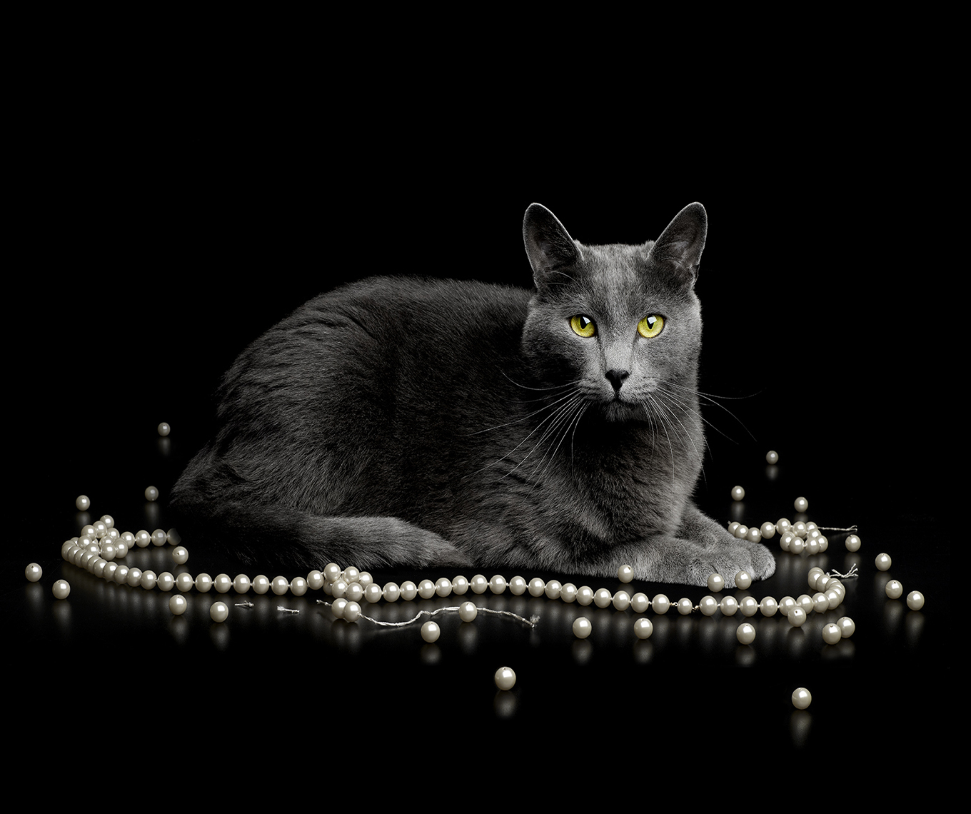 Cat w Pearl Necklace copy