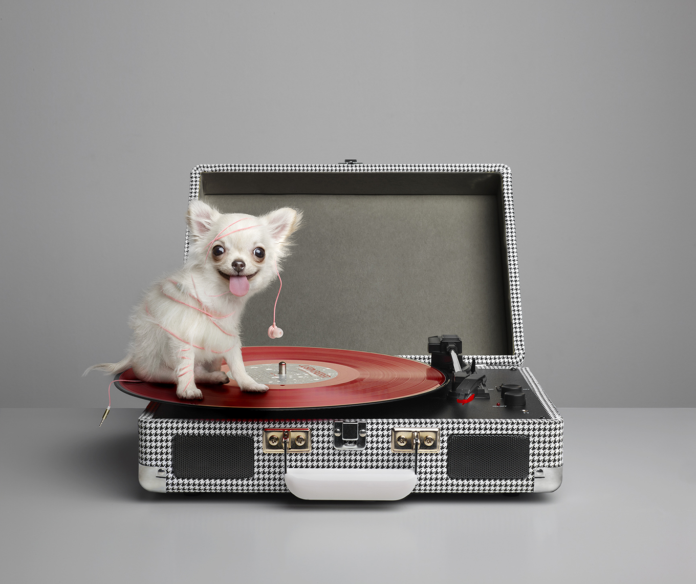 Chihuahua on Record Player ip3 copy