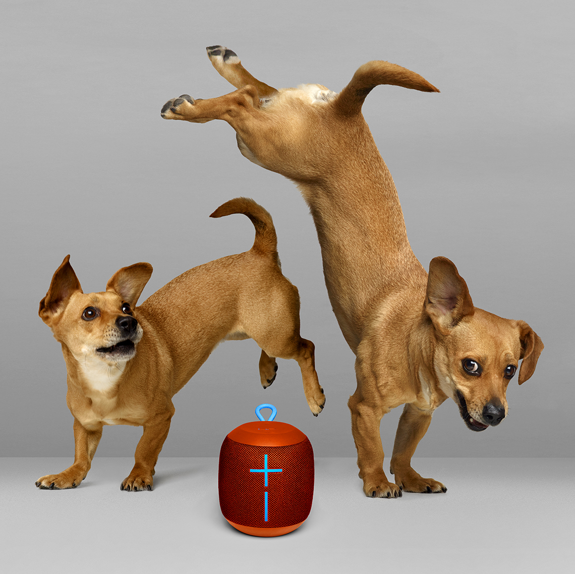 DancingDogs2ip3