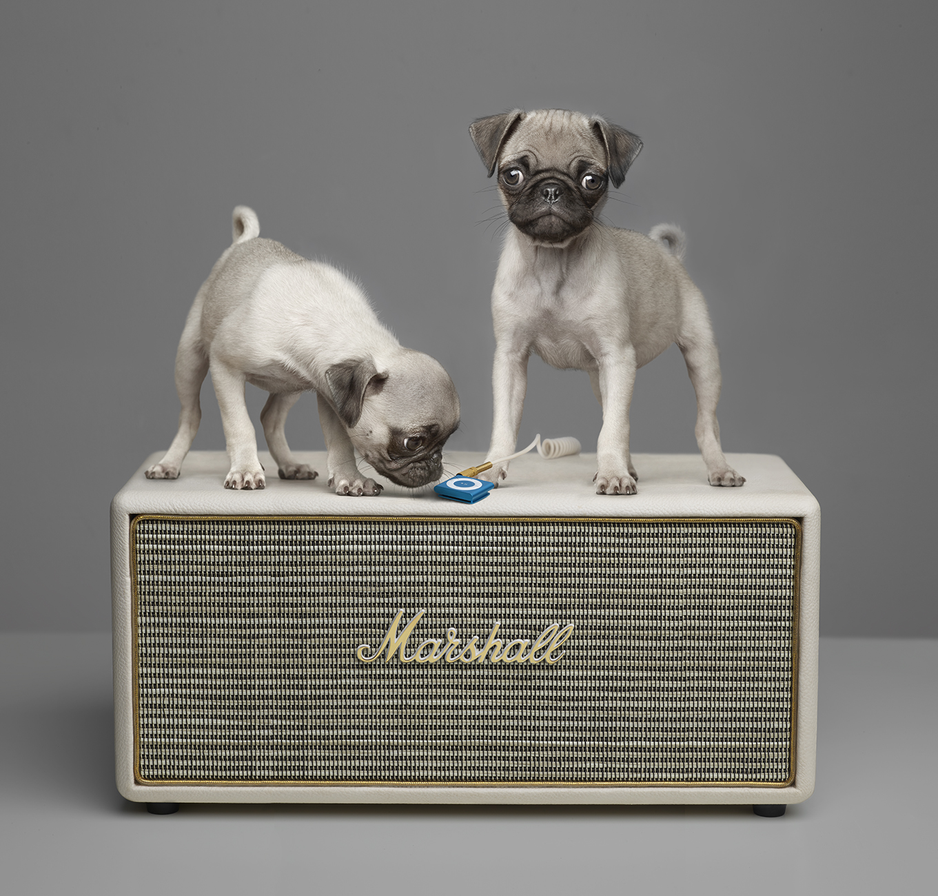 Pugs on Marshall Amp ip2 copy