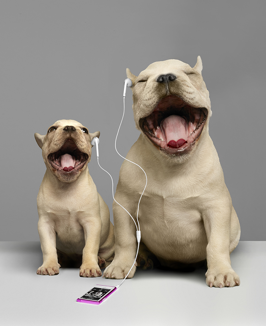 Singing Bulldogs ip4 copy